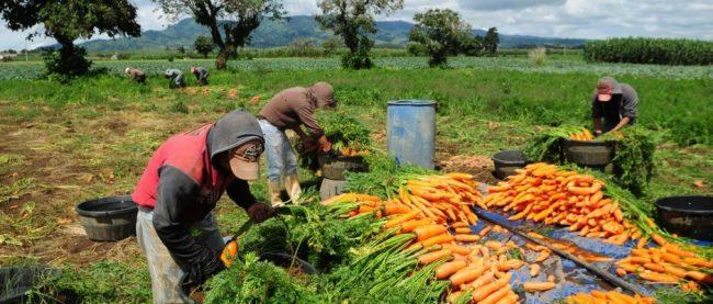 La agricultura familiar crece en la norpatagonia