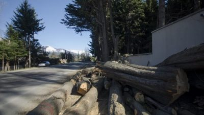 La tala de árboles se multiplica en el oeste de Bariloche