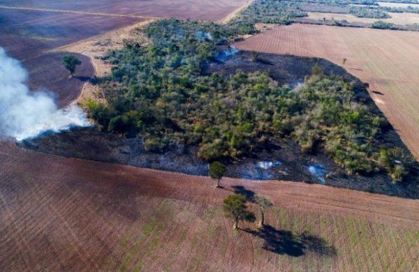 Deforestación en el Chaco Argentino: un estudio del CONICET advirtió sobre el impacto de la expansión agropecuaria