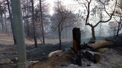 Argentina, a punto de llegar al millón de hectáreas incendiadas