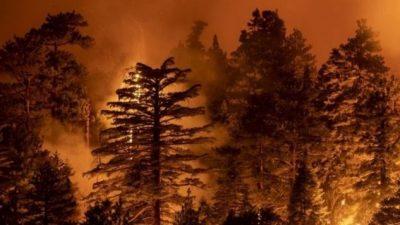 Diputados avanza con ley que busca frenar los incendios