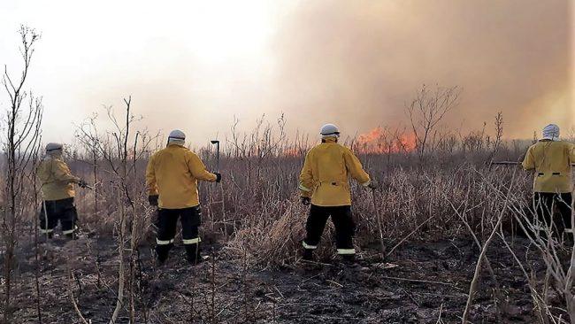 """Cabandié: """"Apagar un incendio en el Delta del Paraná cuesta 20 millones por día"""""""