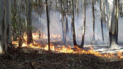 Corrientes: el fuego provocó «una pérdida masiva» de su fauna