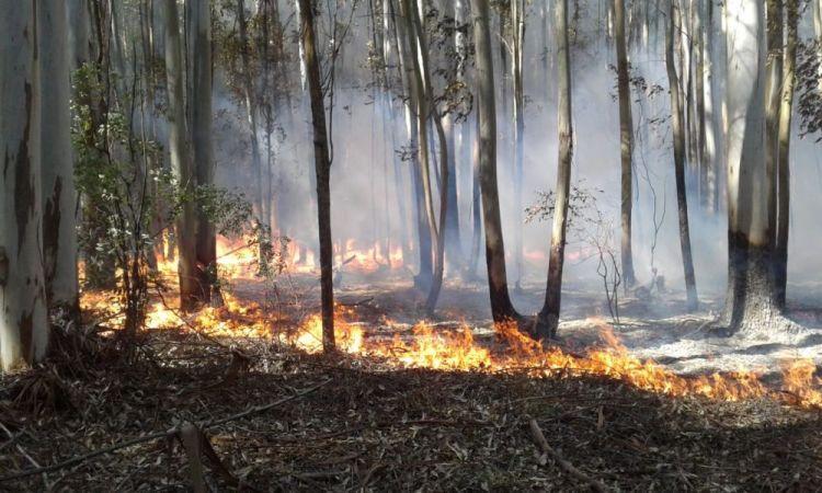 """Corrientes: el fuego provocó """"una pérdida masiva"""" de su fauna"""