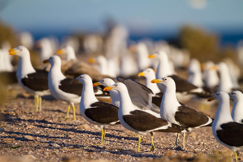 Islote Lobos: la asombrosa fauna de la joya oculta del golfo San Matías