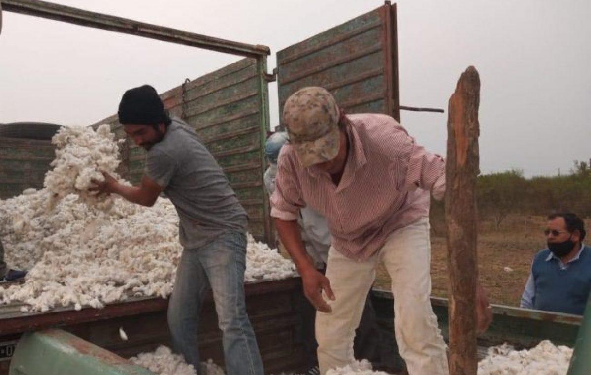 Chaco: comunidades qom producen algodón agroecológico