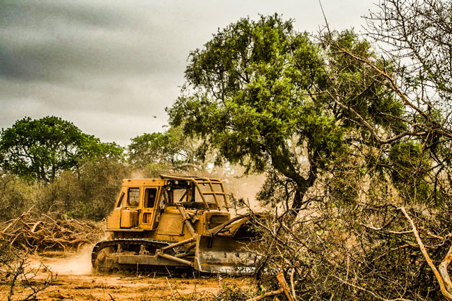 Greenpeace denuncia que durante la cuarentena se deforestaron casi 50.000 hectáreas