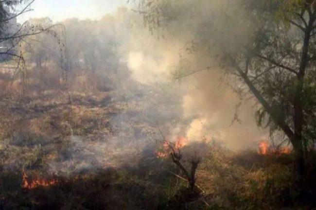 Incendios forestales: el Parque Nacional Calilegua y la Reserva Natural Las Lancitas están en riesgo