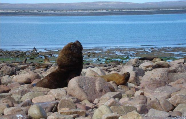 Río Negro: Cedieron tierras para el Parque Nacional Islote Lobos