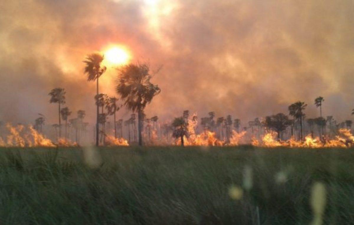 Aprobaron proyecto que prohíbe la venta de campos incendiados intencionalmente