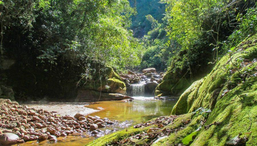 La selva de montaña más increíble de Jujuy, en el parque Calilegua