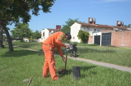 Refuerzan el pulmón verde de Lomas de Tafí con 3000 árboles