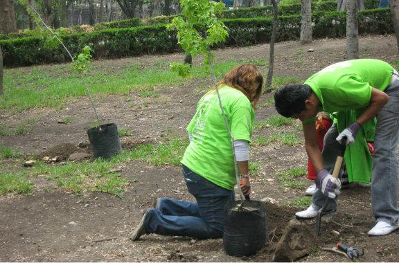 Plantaron cinco mil árboles entre 50 municipios y ONGs santafesinas