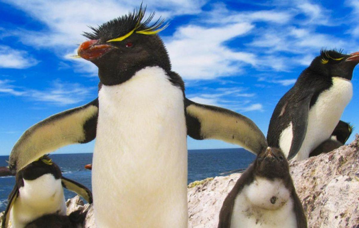 La Ruta Azul, un recorrido patagónico entre pingüinos y fauna marina