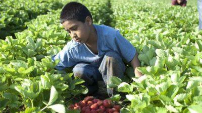 La OIT advierte que el trabajo infantil podría aumentar