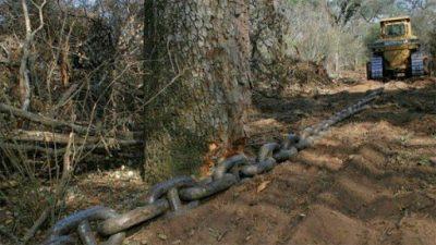 La pandemia no frenó las topadoras y en 2020 aumentó la deforestación en el norte del País