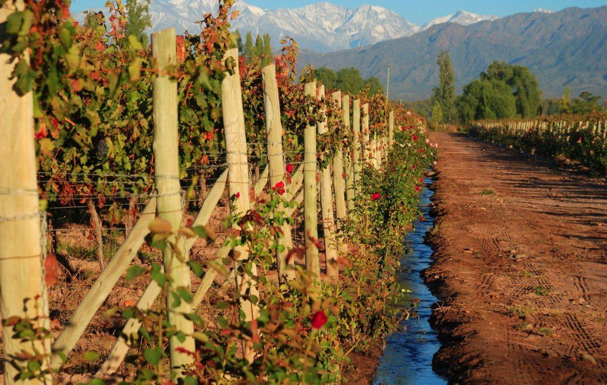 Para recorrer el país a través de sus mejores vinos