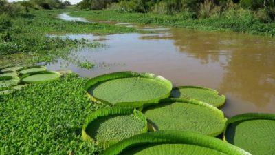 Provincia y Nación avanzan en un inventario de humedales en territorio santafesino