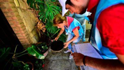 Dengue: el mosquito, en el 30% de los hogares de Córdoba capital