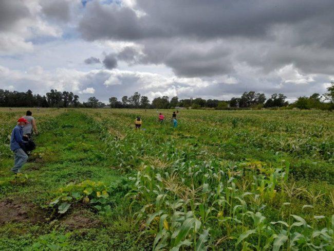 La toma de tierras que se convirtió en una huerta vecinal