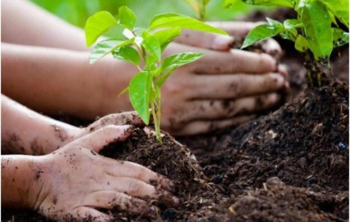 Ley de educación ambiental: cambiar paradigmas para sembrar futuro