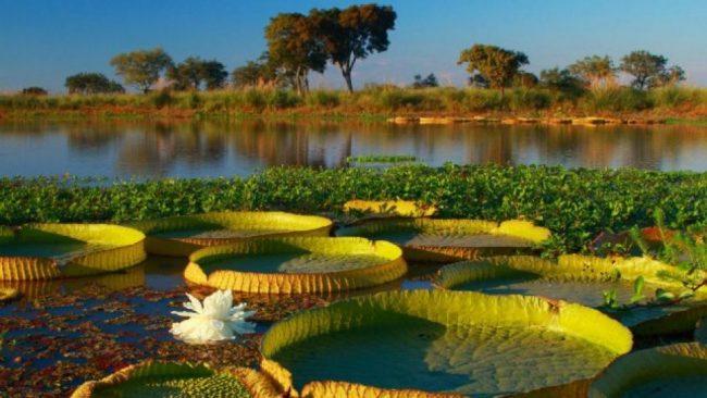 Santa Fe quiere ampliar en 40 veces el Parque Nacional que protege el Delta y las islas del Paraná