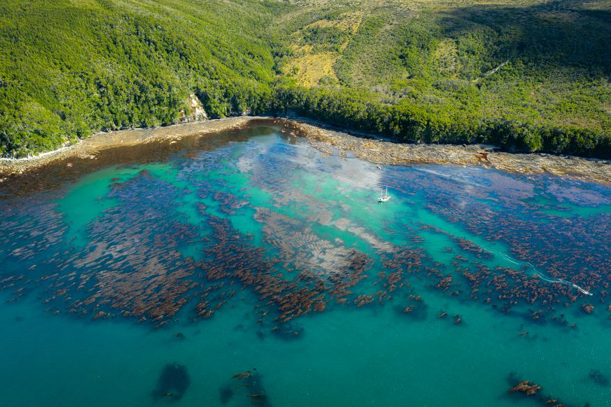 "Cómo es Península Mitre, hogar de la ""selva marina"" en Argentina"
