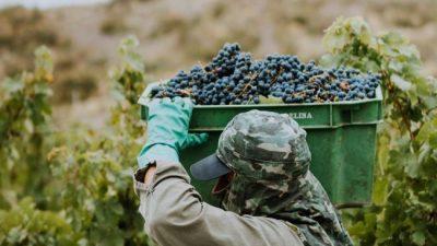 Los vinos argentinos generan más empleo y dólares por exportación que la soja