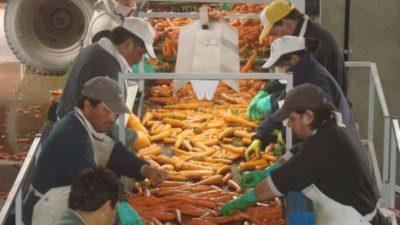 Para generar alimentos nutritivos, buscan aprovechar los descartes de la zanahoria