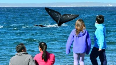 El Doradillo, la playa donde las ballenas avistan a la gente a 15 km de Puerto Madryn